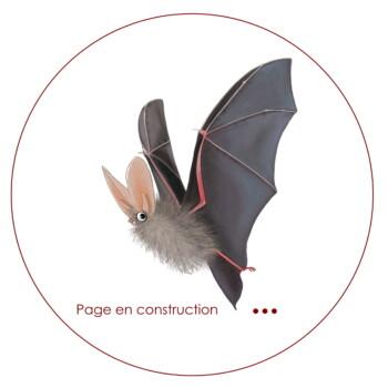 Amikiro Page en construction
